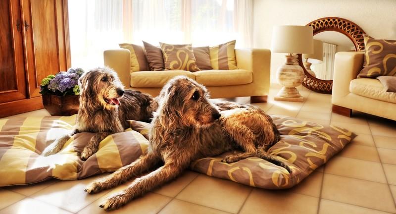 Hundekissen groß