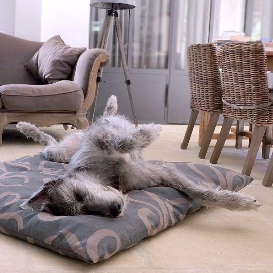 media/image/Hundebett-Hundebetten-Hundekissen-Hundedecke-Hundekorb-Hundekoerbchen-Irischer-Wolfshund.jpg